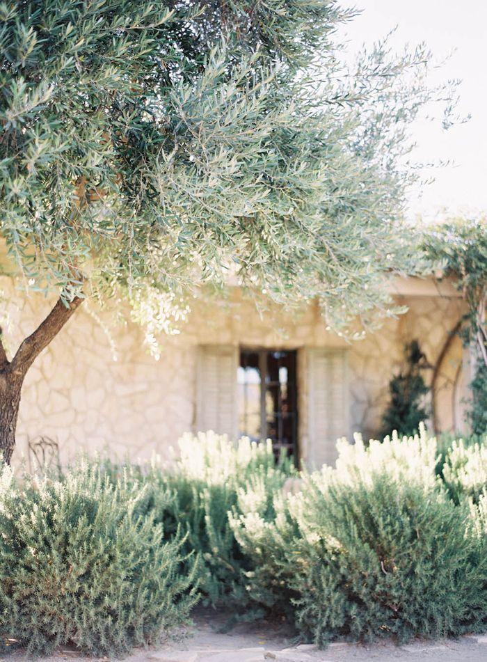 470f45dfd4d37329ef8eb198d19ea976--mediterranean-plants-mediterranean-landscape-california